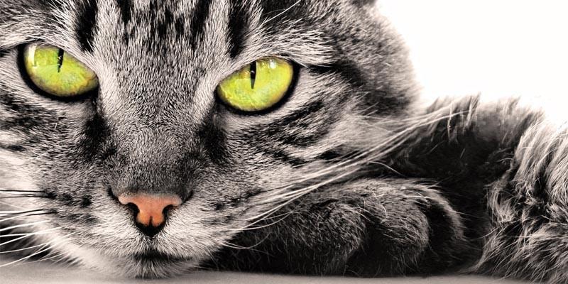 La storia vista con gli occhi di un gatto3-800x400