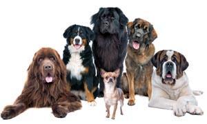 La verità sui cani- la scienza ribalta i luoghi comuni-300x180