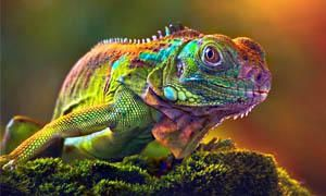 L'iguana-300x180
