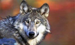 Origini-dagli antenati selvatici agli animali domestici-300x180