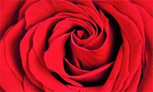 foto3-rosso-300x180