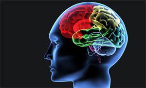 La specializzazione delle regioni cerebrali-300x180