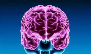 L'asimmetria cerebrale-300x180