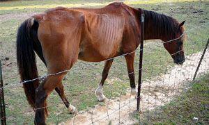 Maltrattamento, uccisione o danneggiamento di animali-300x180