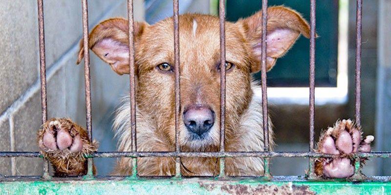 Reati ed illeciti amministrativi legati ai nostri animali2-800x400