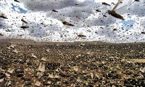 Il popolo contro le locuste-300x180