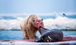 Anche l'Artico è un luogo pericoloso-300x180