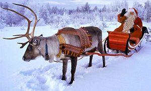 Le renne-300x180