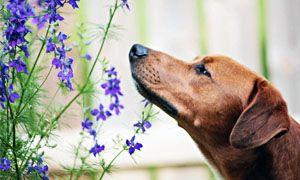Come e cosa impara il cane attraverso l'olfatto-300x180