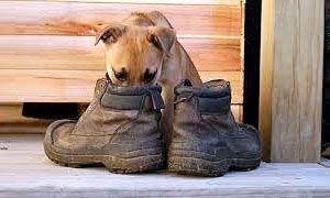 La memoria olfattiva del cane, i ricordi, le aspettative-300x180
