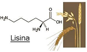 Proteine e acidi grassi Omega-300x180