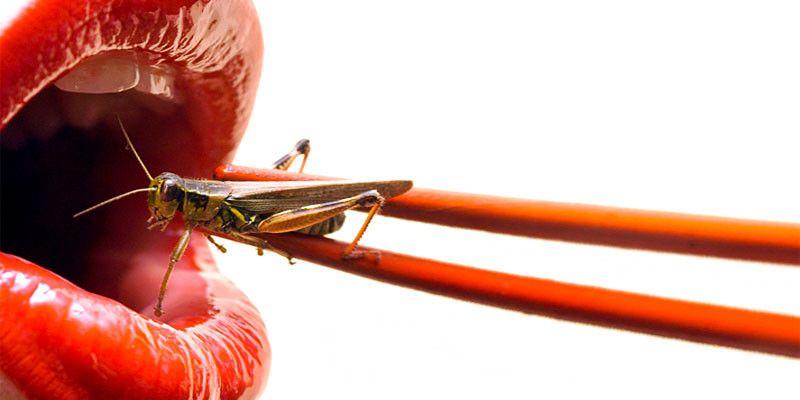Scopriamo gli insetti3-800x400