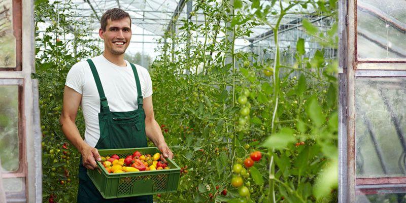 Agricoltura biologica: 5 concetti indispensabili di agronomia