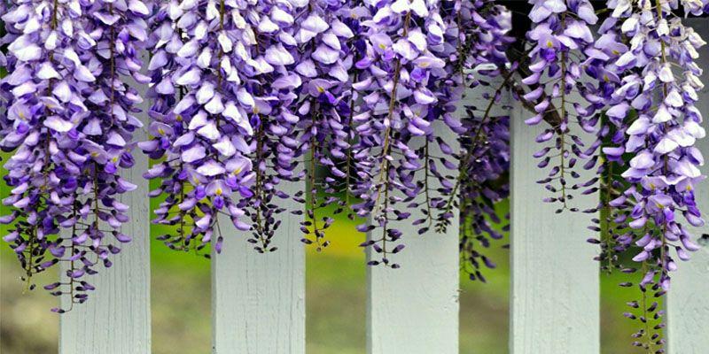 Arbusti e rampicanti il cuore del giardino for Nomi di arbusti e cespugli