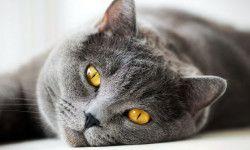 Conoscere il gatto4-800x400