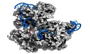 Il DNA umano manipolato con successo-300x180