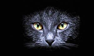 Misteriosi felini-300x180