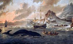 Caccia alle balene2-800x400