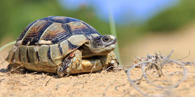 tartaruga di terra un 39 amica in giardino