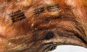 Tatuaggi- una storia lunga più di 5.000 anni-300x180