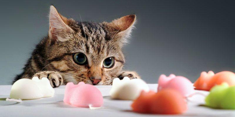Gioca col tuo gatto4-800x400