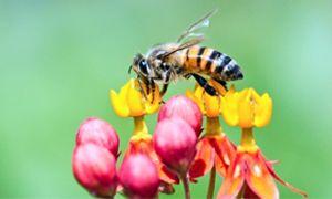 L'inquinamento? Si rileva con le api-300x180