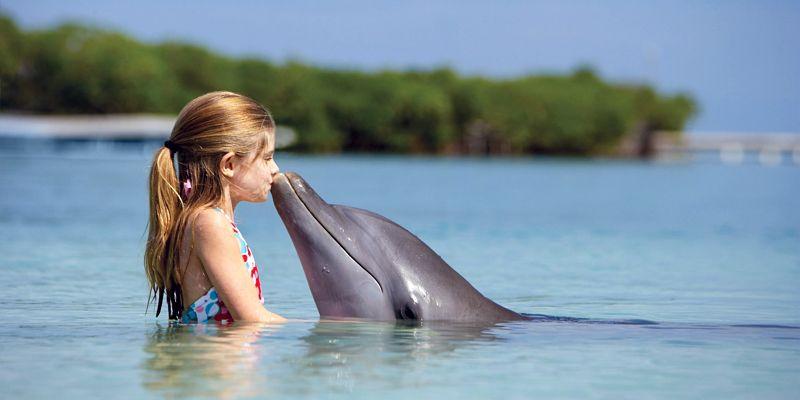 La misteriosa intelligenza dei delfini1-800x400