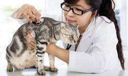 Le cinque malattie più comuni del gatto3-800x400