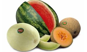 Meloni, cocomeri-300x180