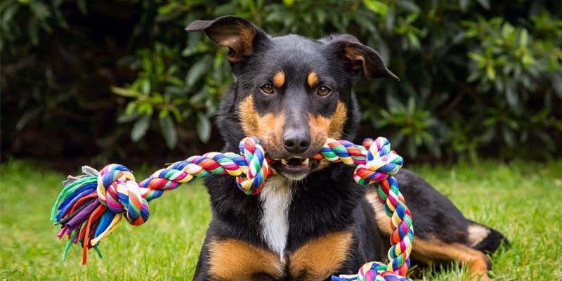 Gioca con il tuo cane3-800x400