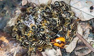 I servizi delle api-300x180
