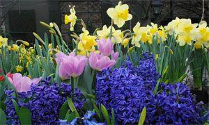 In primavera-300x180