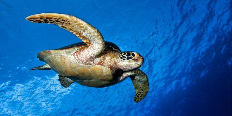 l 39 incredibile viaggio della tartaruga marina