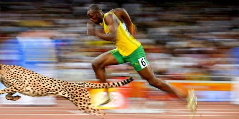 Olimpiadi bestiali-800x400