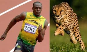 Usain Bolt Vs Ghepardo-300x180