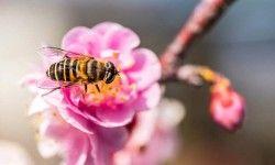 Vita da ape1-800x400