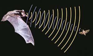 Caccia al pipistrello-300x180