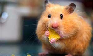 I topi amano il formaggio-300x180