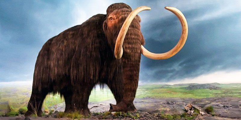 Gli ultimi mammut-800x400