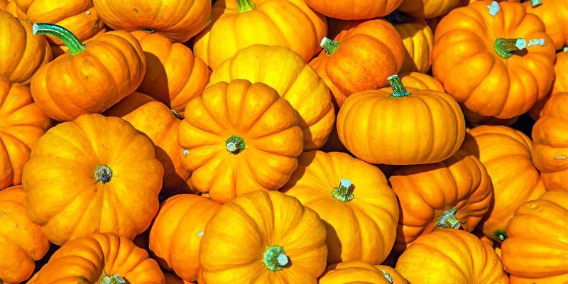 La zucca, regina indiscussa degli antiage d'autunno