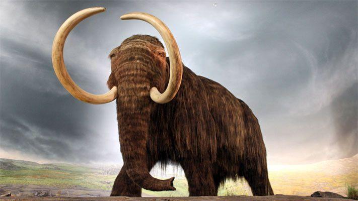 Mammut1-711x400