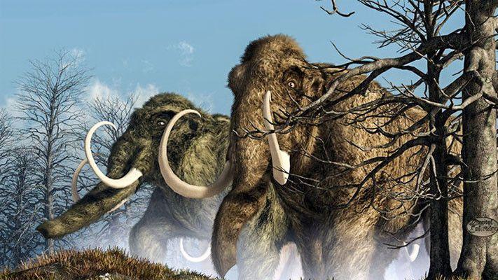 Mammut2-711x400