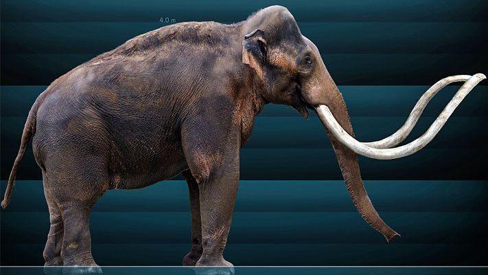 Mammut3-711x400