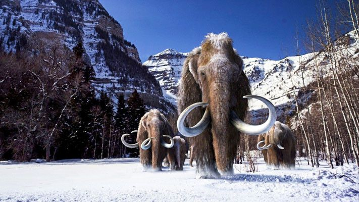 Mammut4-711x400