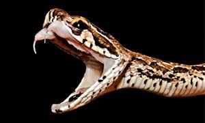 Serpenti-300x180
