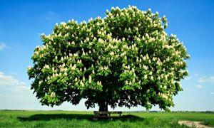Sono i cereali che crescono sugli alberi-300x180