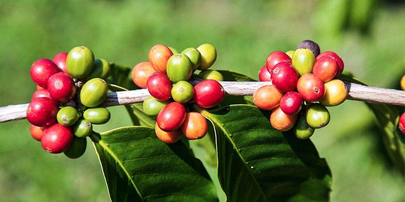 Le piante che ci hanno cambiato la vita1-800x400