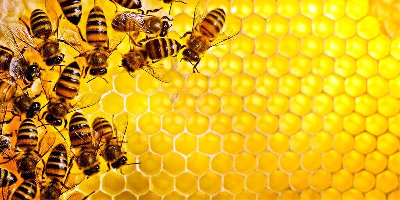 Se le api sparissero1-800x400