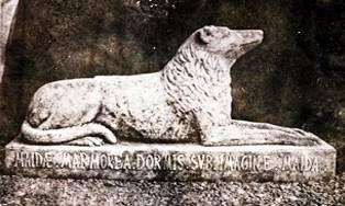 I cani di Walter Scott-300x180