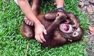 I neonati e le grandi scimmie-300x180